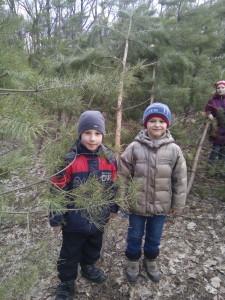 лісництво 003